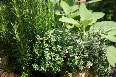 banho-de-ervas-frescas