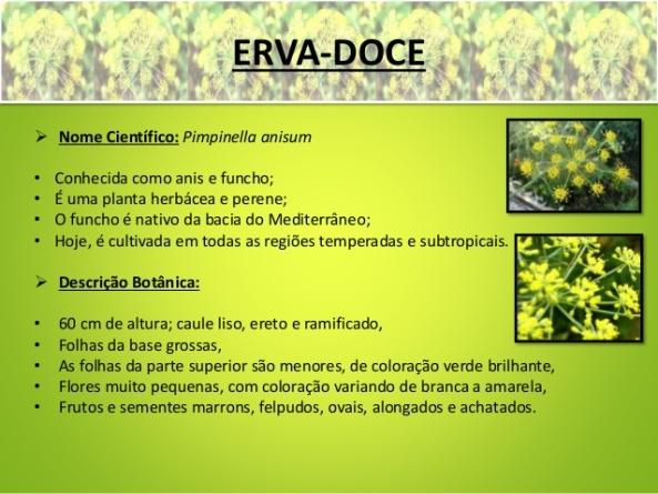 ervas-medicinais-erva-doce-ch-verde-ch-preto-e-pariri-3-638