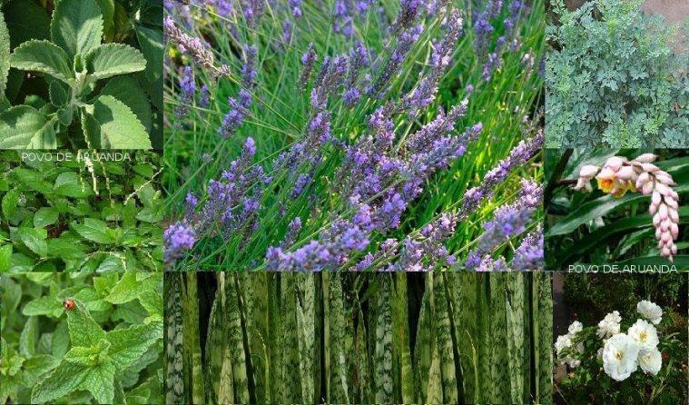 Ervas e Plantas | Tenda Espírita Pai Mané de Aruanda