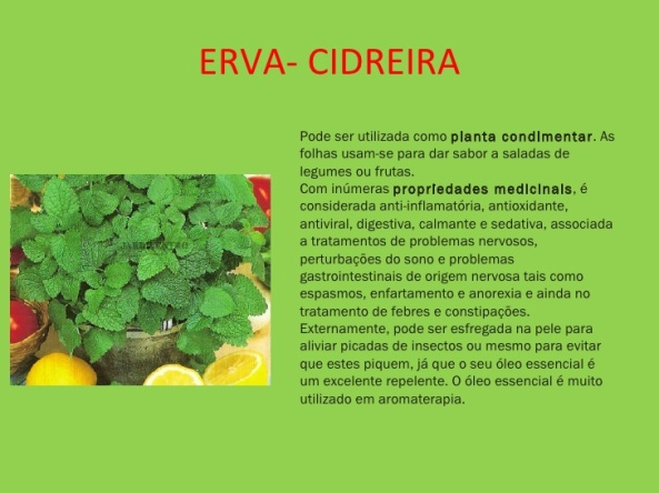 plantas-medicinais-8-728